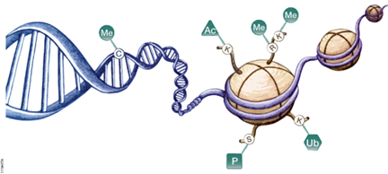 genetik-1.png.9af9d9968b205bcb7a28312e5dc43109.png
