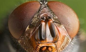 size bakan bir sinek