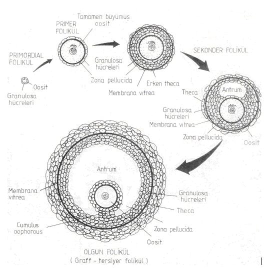 Mi a rövidlátás 3. fokozata, Myopia - fok, kezelés, myopia korrekció, szem gyakorlatok