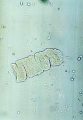 Biyokimya Laboratuvarı