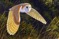 Kuşlar (Aves Sınıfı)