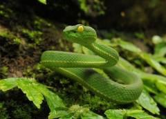 Sürüngenler - (Reptilia Sınıfı)