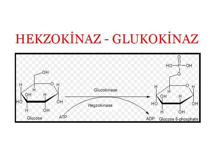 Hegzokinaz ve Glikokinaz