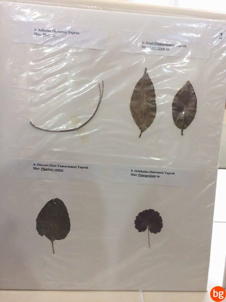 Yaprak Şekilleri 3
